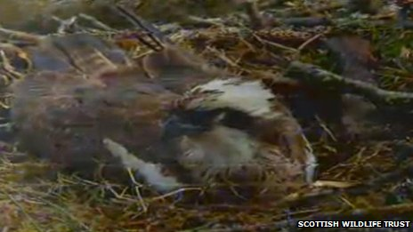 Scottish Wildlife Trust webcam image of Lady