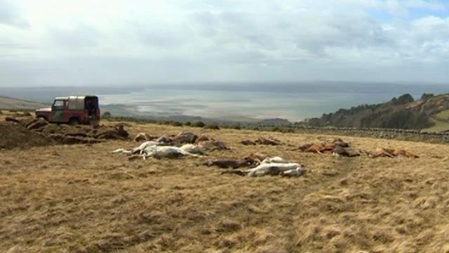 Dead ponies