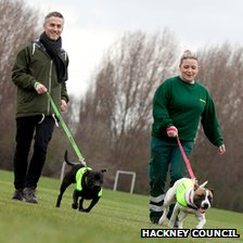 Dogs in new coats, leads and collars
