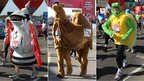 Runners dressed as the FA Cup, a camel and a turtle