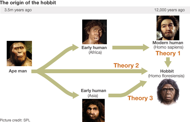 Hobbit descendants flow chart