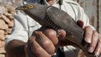 Injured cuckoo is cared for at a veterinary centre