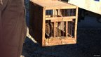 Trapped quails are rescued by police