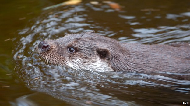 The otter: return of the elusive movie star