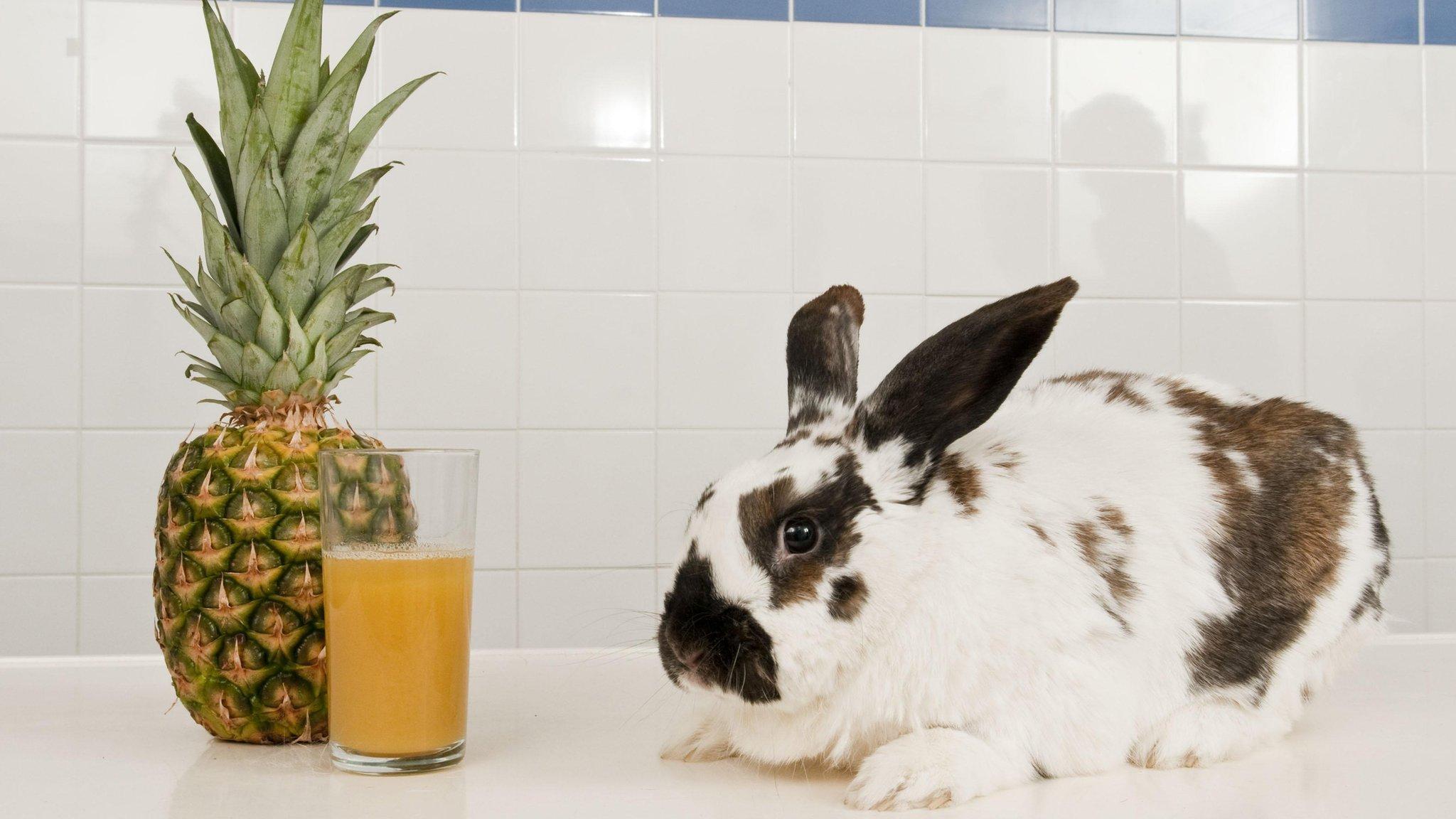 Rabbit saved by pineapple juice   CBBC Newsround
