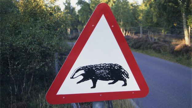 Badger crossing sign, Scotland