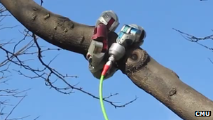 Robot snake wrapped around tree branch