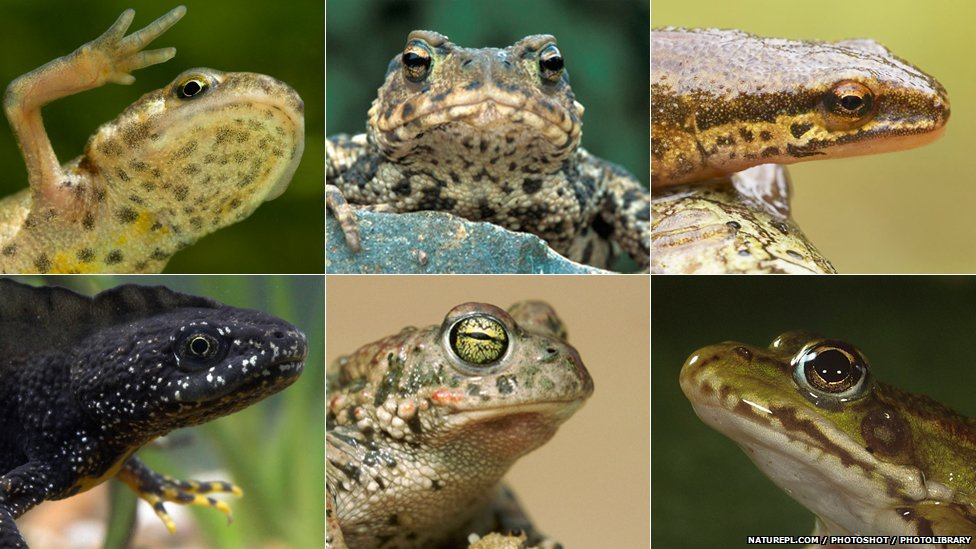 Go Back > Gallery For > Amphibians Pictures 10 Examples Of Reptiles