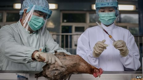 Scientists inspect chicken