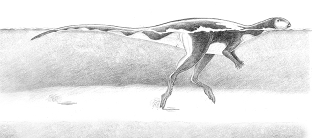 A drawing by Anthony Romilio of dinosaur swimming at Lark Quarry