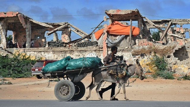 A man walks with a donkey carting sacks of charcoal