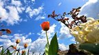 Tulips and other flowers against a blue sky with a few clouds.