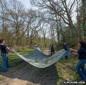 Establishing UK tree seed bank 'crucial'