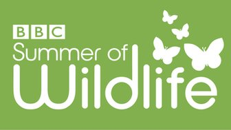 BBC Summer of Wildlife logo (green)