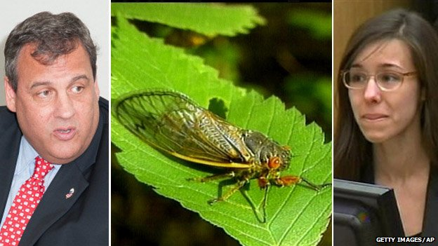 Chris Christie, a cicada and Jodi Arias