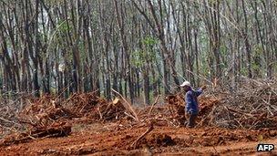 File photo: Rubber plantation in Vietnam