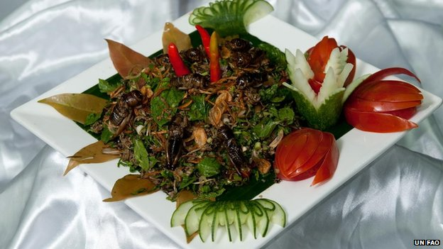 U N Insects their diet with insects