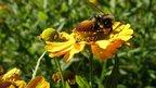 Antibiotics from the beehive by Muhammad Nadeem Kardar