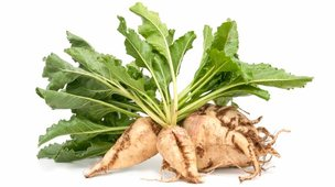 Sugar beet