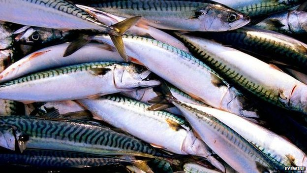 EU agrees to new fish dumping laws