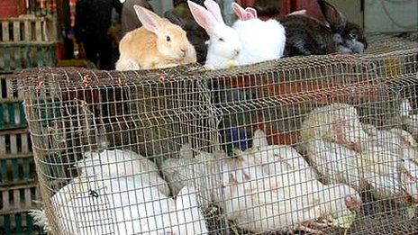 Rabbits for sale in a Gazan market