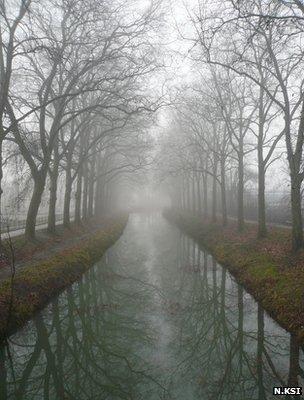 Plane trees lining the Canal du Midi (Image: Nirgal Ksi)