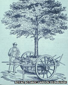 Drawing of a tree transplanting machine used when the Garden moved from Leith Walk to Inverleith