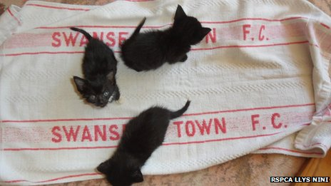 The Swansea Town FC towel with kittens on it