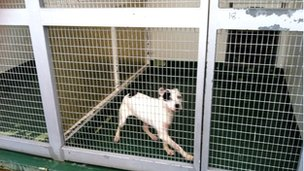 Dog at Birmingham Dogs Home