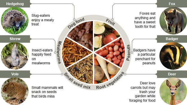 Food preferred by UK garden mammals