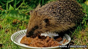 Hedgehog Diets