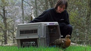Capercaillie released