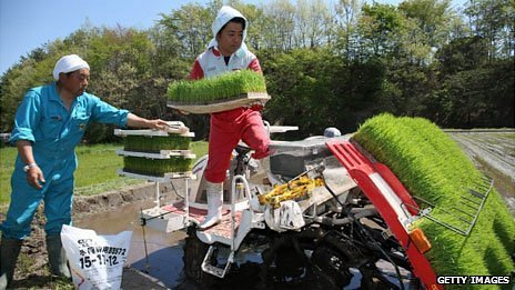 Rice planting, Fukushima, May 2013