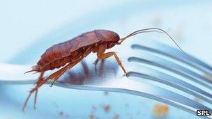Cockroach on a fork (c) SPL