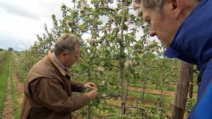 BBC Points West reporter Steve Knibbs visits a fruit farm