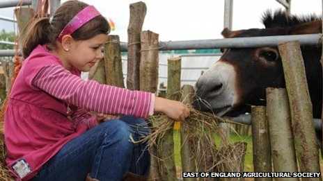Girl feeding donkey