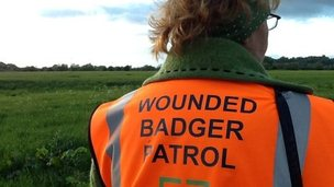 A member of Gloucestershire Against Badger Shooting's wounded badger patrol