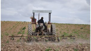 A man drives a tractor on Marlinaleda's co-operative farm, which employs around half the local population.