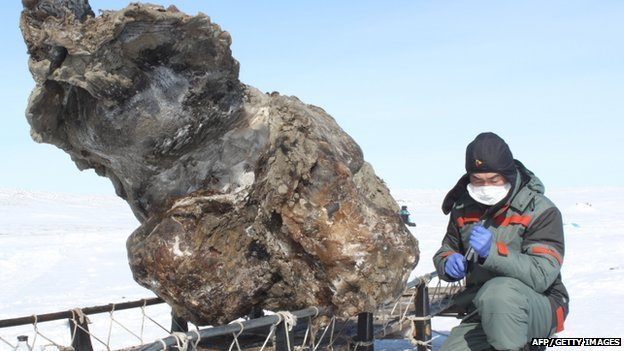 Female mammoth remains found in the Arctic