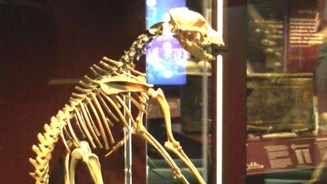 A dog skeleton on show
