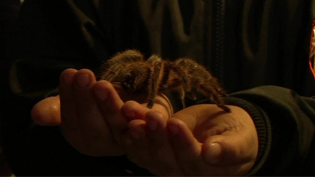 A child holding a Tarantula