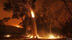 Trees burn in a wildfire near Los Angeles, California 2 June 2013