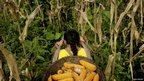 A woman carrying a basket of corn in a field in the Quichua community of San Pedro Sumino in the province of Napo in the Ecuadorean jungle.