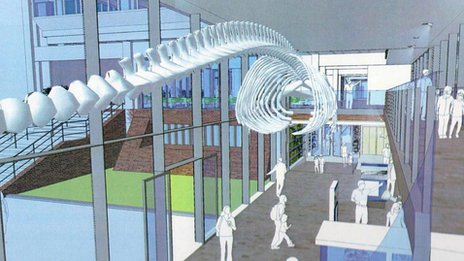 Artist's impression of interior of refurbished Museum of Zoology, Cambridge, with whale skeleton