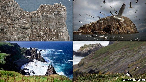 Bempton Cliff / Bass Rock / Rathlin Island / Skomer Island