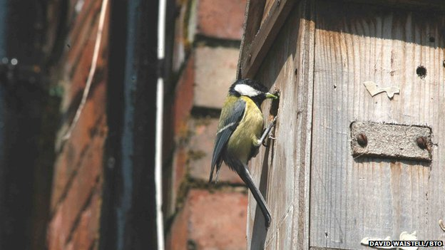 Blue tit on a nest box
