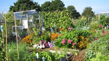 Allotment plot by Betty Farruggia