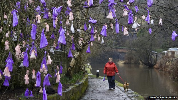 A woman walks her dog under the Todmorden tree of dog poo bags