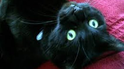 Jago's cat