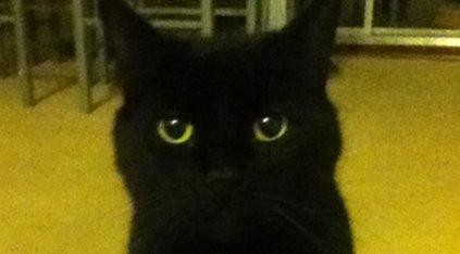 Jess' cat